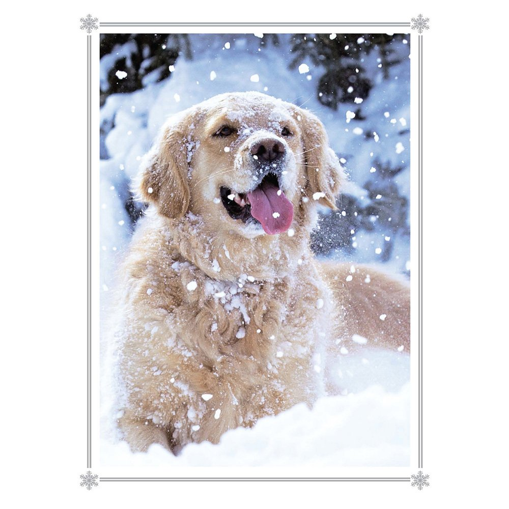 catching snowflakes golden retriever christmas cards