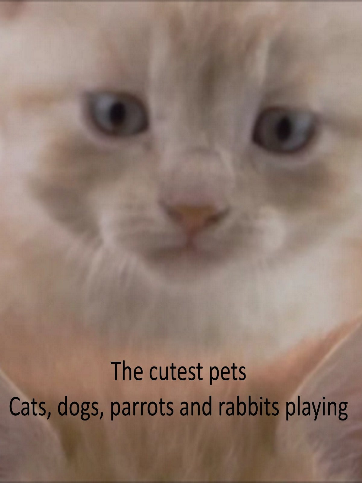 The Cutest Pets