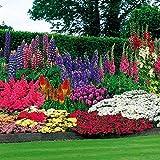 47 Plantes de Jardins Perpétuels + 100 bulbes