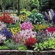 Jardin Cottage - 61 plantes