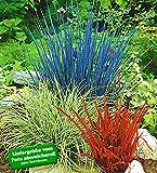 BALDUR-Garten Ziergras Farb-Mischung