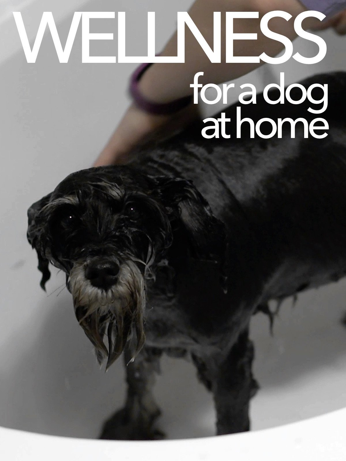 Wellness for dog at home