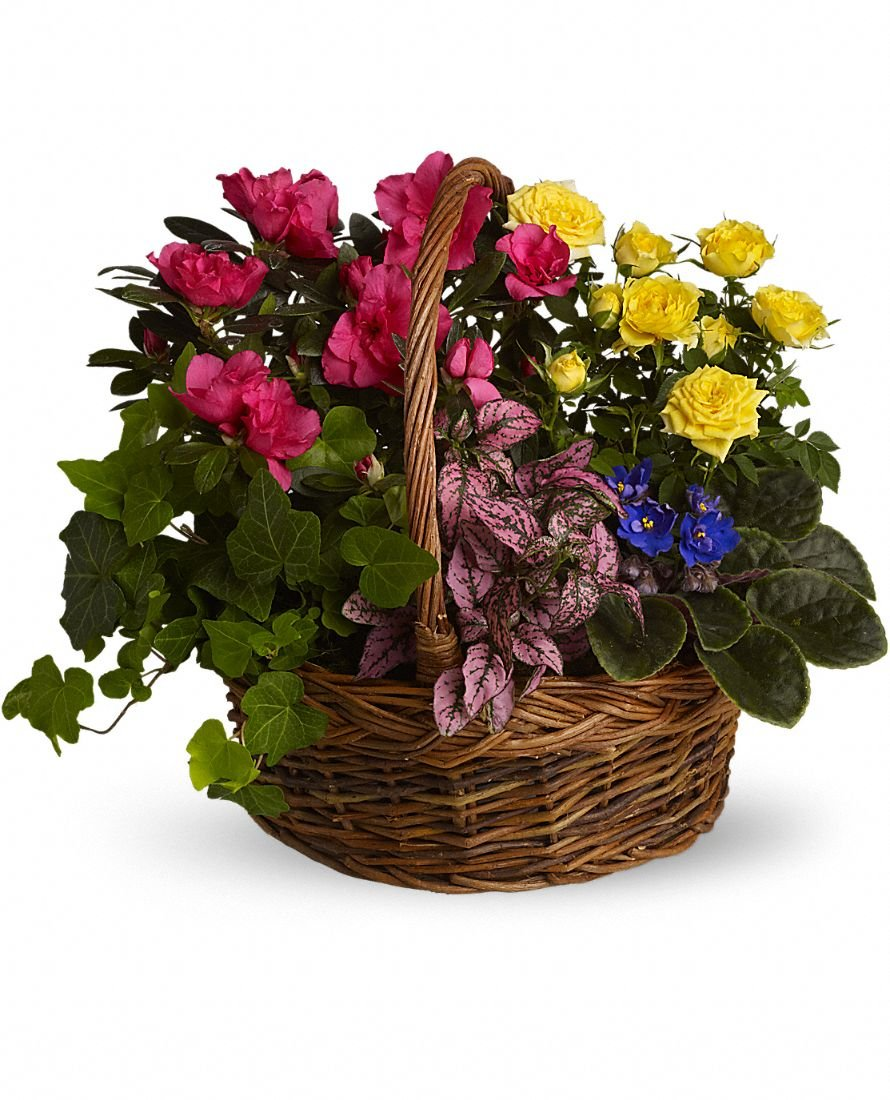 African Violets - Mixed basket