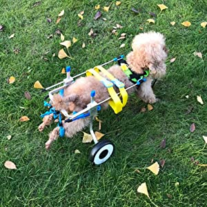 Fdit Adjustable Pet Dog Wheelchair Cart Disabled Dog Assisted Walk Car Pet Hind Leg Exercise Car for Hind Legs Rehabilitation Dog Walk (M) (Tamaño: M)