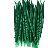Shekyeon Dark Green 32-36inch 80-90cm Dyed Pheasant Tail Feather Party Festival Supplies DIY Craft Feather Pack of 20 (Color: Dark Green)
