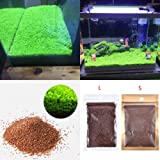 Aquarium Plants Seeds, Double Leaf Carpet Water Grass Green Aquatic, for Fish Tank Rock Lawn Garden Decoration (Color: Green, Tamaño: Small Leaf)