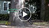 This Dog Can Rope Swing And Hula Hoop At The Same...