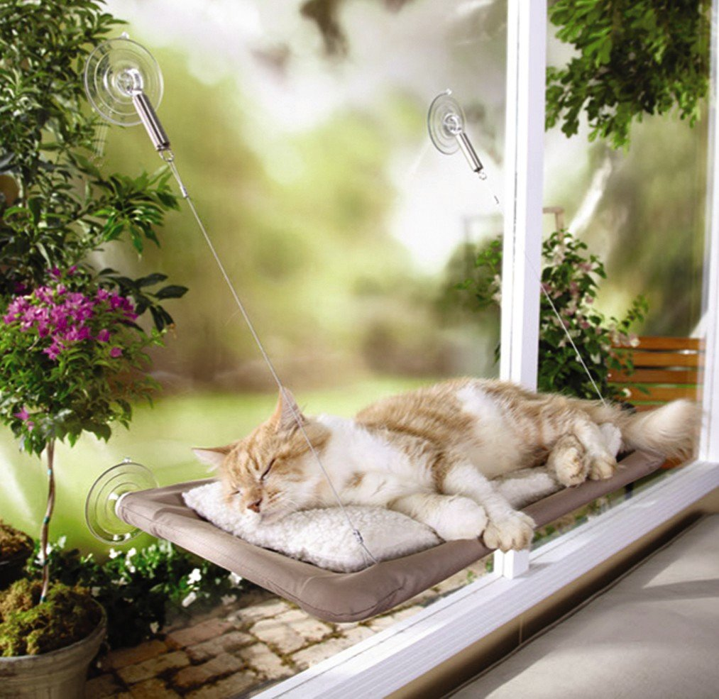 Http Www Ebay Com Itm Sunny Seat Window Mounted Cat Bed New Free Shipping 261626207189
