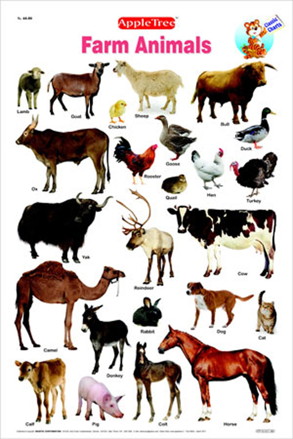 essay on domestic animals for kids What is the difference between wild and domestic animals wild animals live without direct influence from the human whereas domestic animals live under the care of.