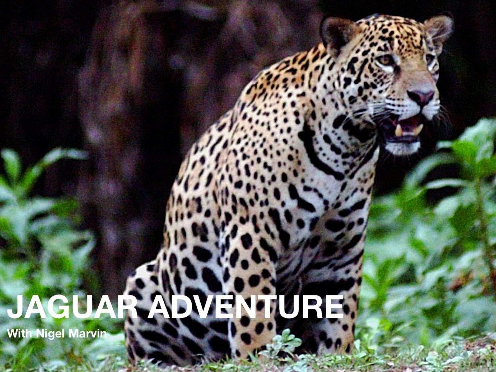 Jaguar Adventure with Nigel Marven - Season 1