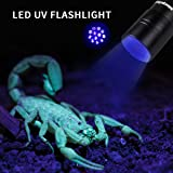 Morpilot 2 Pcs UV Handheld Flashlight 12 Led 395nm Ultraviolet Blacklight Pet Dog Cat Stain Urine Detector Light Torch, Find Stains on Carpet, Rugs, C