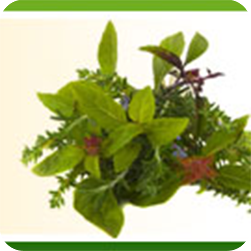 Herbs 101 - How To Plant, Grow And Cook With Natural Herbs