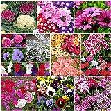 Biocarve Pot Plants Winter Flowers-14 Packets