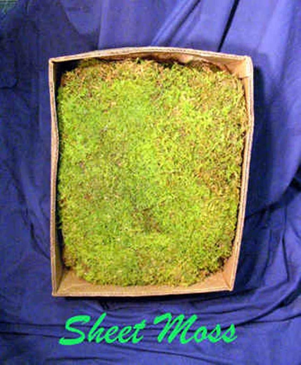 Live Sheet Moss