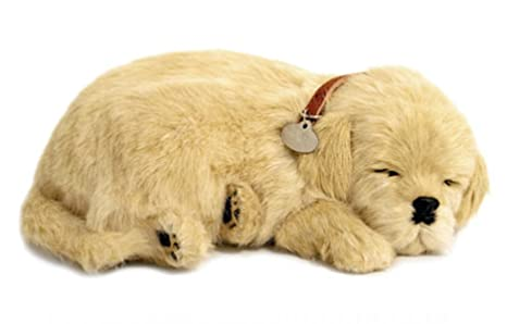 Perfect Petzzz - 65408 - Peluche Interactive - Chien - Golden Retriever - Animal Qui Respire pour de Vrai - 25 cm