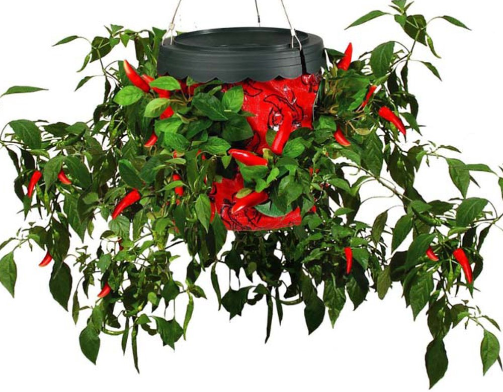 Topsy turvy hanging tomato planter the perfect gift store - Can a plant grow upside down ...