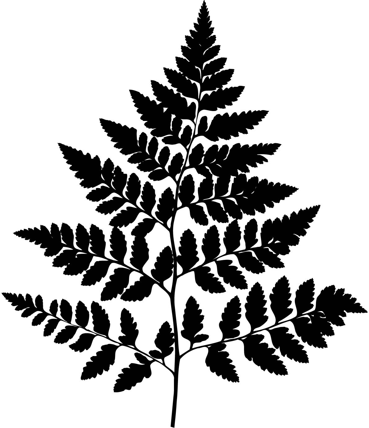 Wall decals leaves