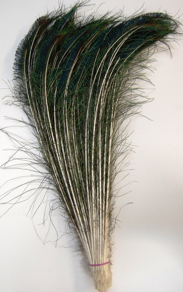 50 Pcs Peacock Swords Natural Feathers 20-25 swords of glass