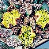 New Lot Beautiful Rare flower cactus Succulent kaktus lithops hybrid bonsai plants 10+ Seeds