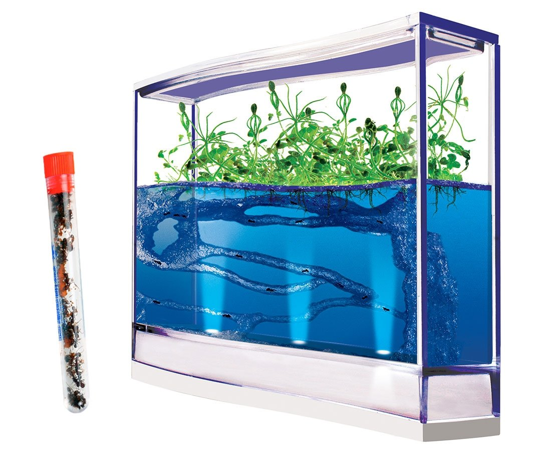 Live Giant Lighted Ecosystem Ant Habitat Shipped with 25 Live Ants Now (1 Tube of Ants) купить