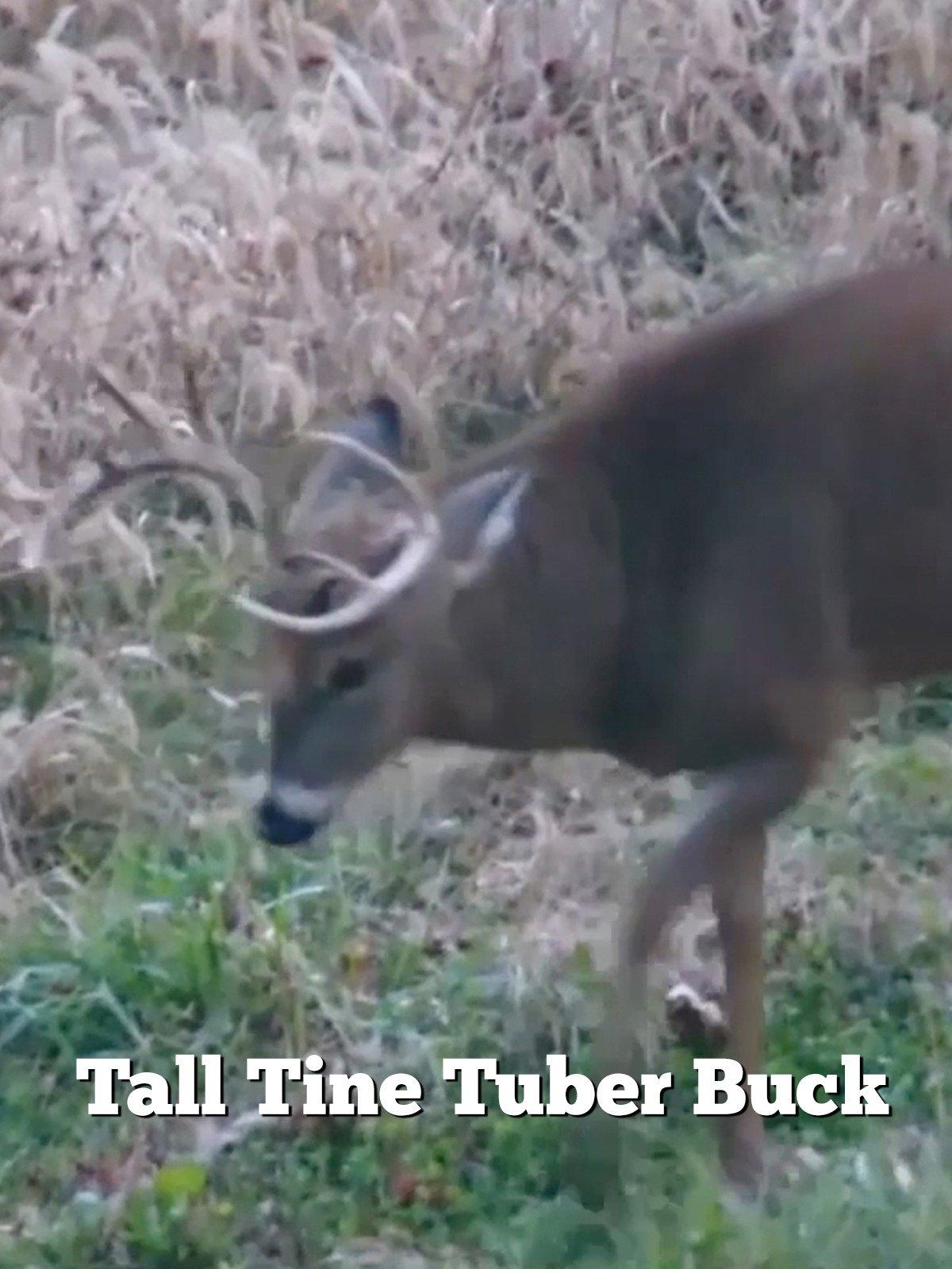 Tall Tine Tuber Buck