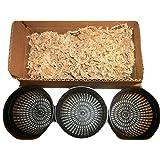 JoelsCarnivorousPlants Three 5 Inch Net Pots with New Zealand Sphagnum Moss