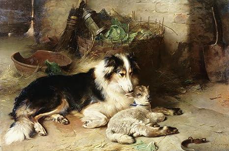 H Motherless Motherless the Shepherd s Pet