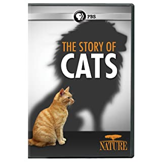 Book Cover: NATURE: The Story of Cats DVD