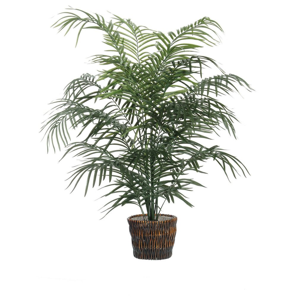 Palm Plants - Dwarf Palm Tree