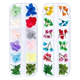 iFancer 72 Pcs Nail Dried Flowers 20 Colors 3D Nail Art Real Flowers Nature Dry Petals Leaves Decor for Nail Art Design Manicure Decoration (Color: Nail Dried Real Flower 3)