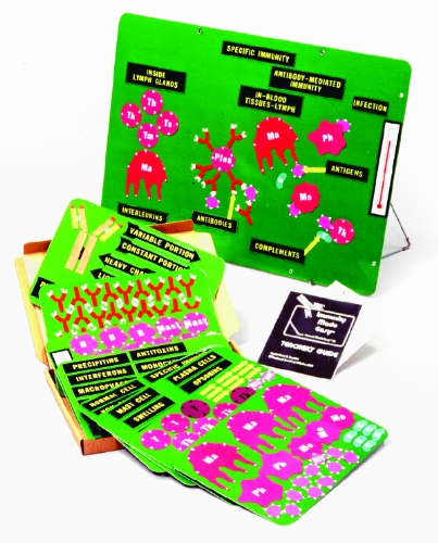 american-educational-teaching-about-immunity-made-easy-model-kit