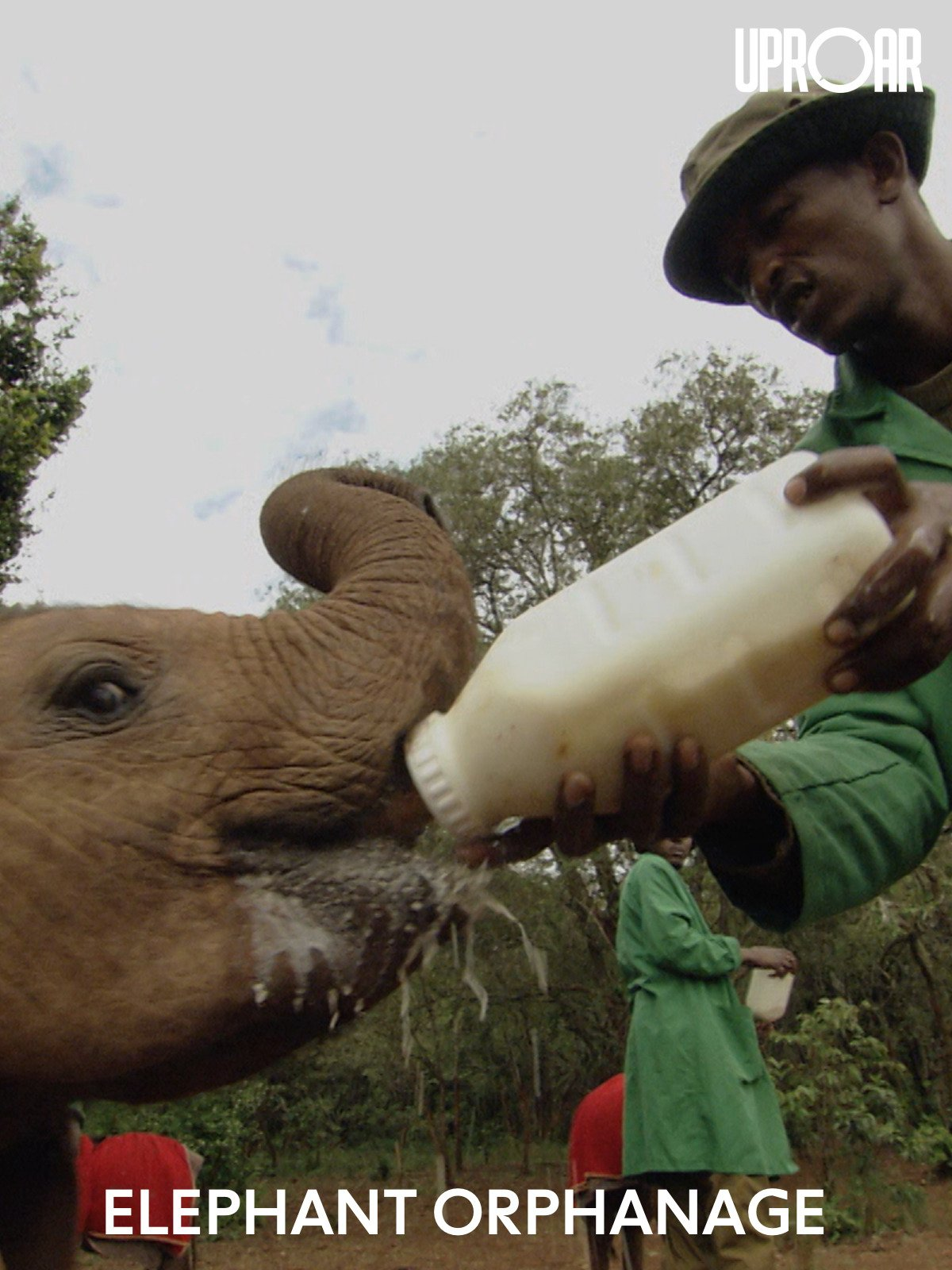Clip: Elephant Orphanage