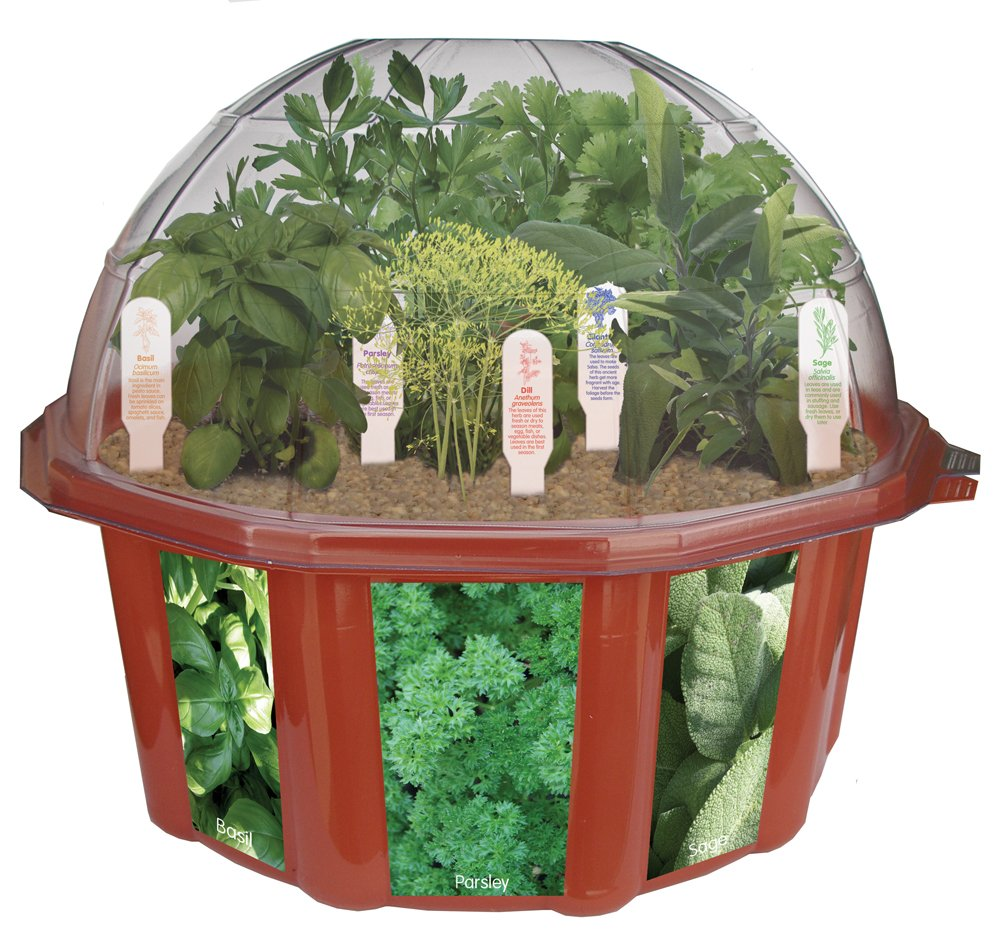 new dome terrarium home growing kit indoor herb plants