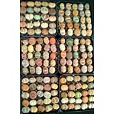 Rare Authentic Lithops Seeds with Germination Guarantee - Freshly Harvest Premium Quality – Pack of 25 Seeds – Mini Germination Kit Included