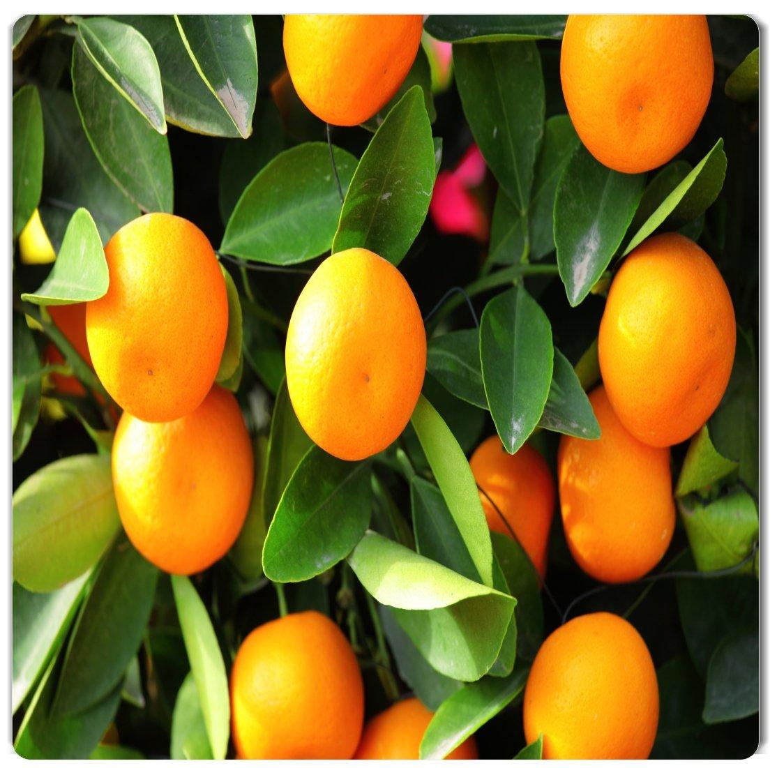Kumquat by Rikki Knight