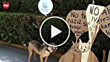 Dogs in Mexico Protest Tax on Pet Food