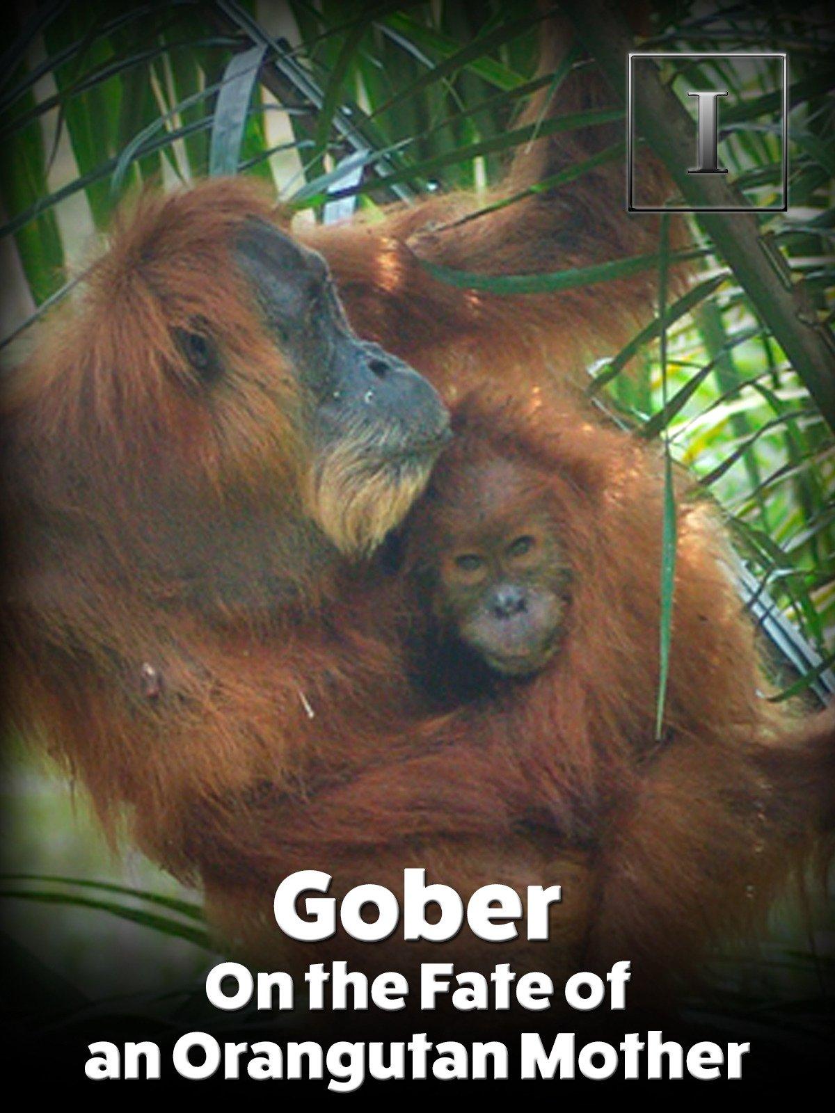 Gober