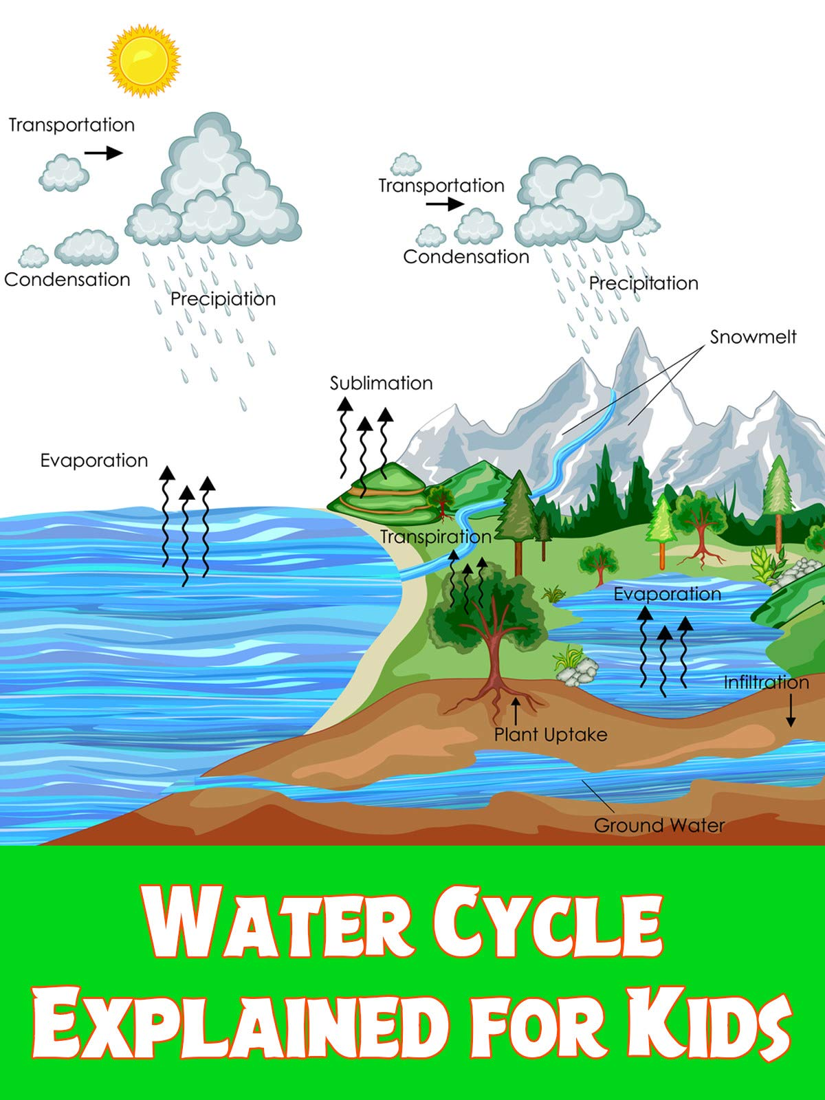 Water Cycle Explained for Kids