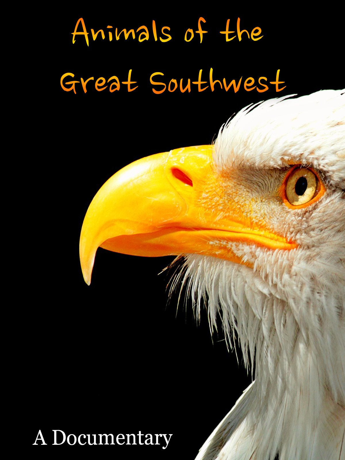 Animals of the Great Southwest A Documentary