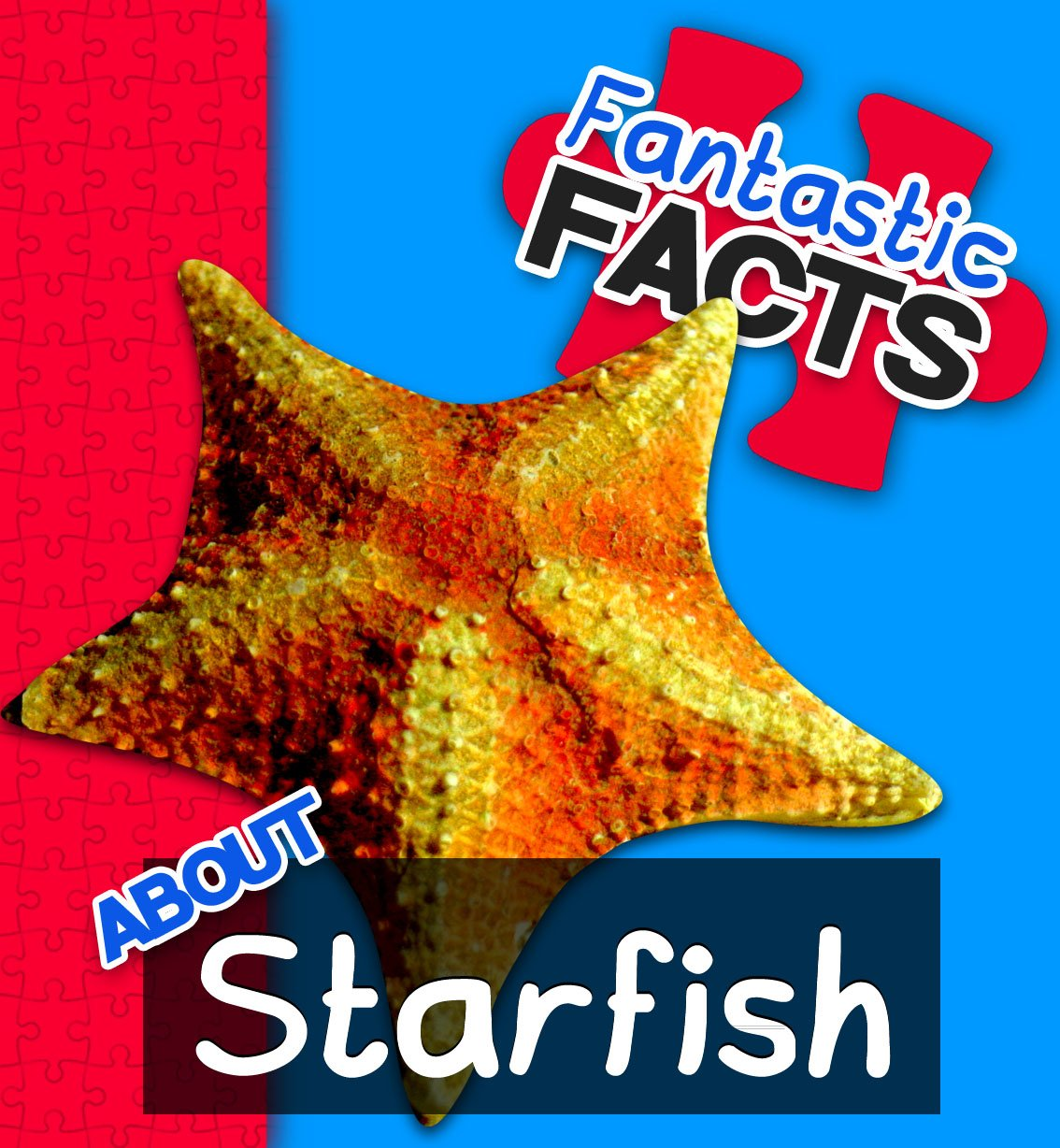Starfish-cover-1