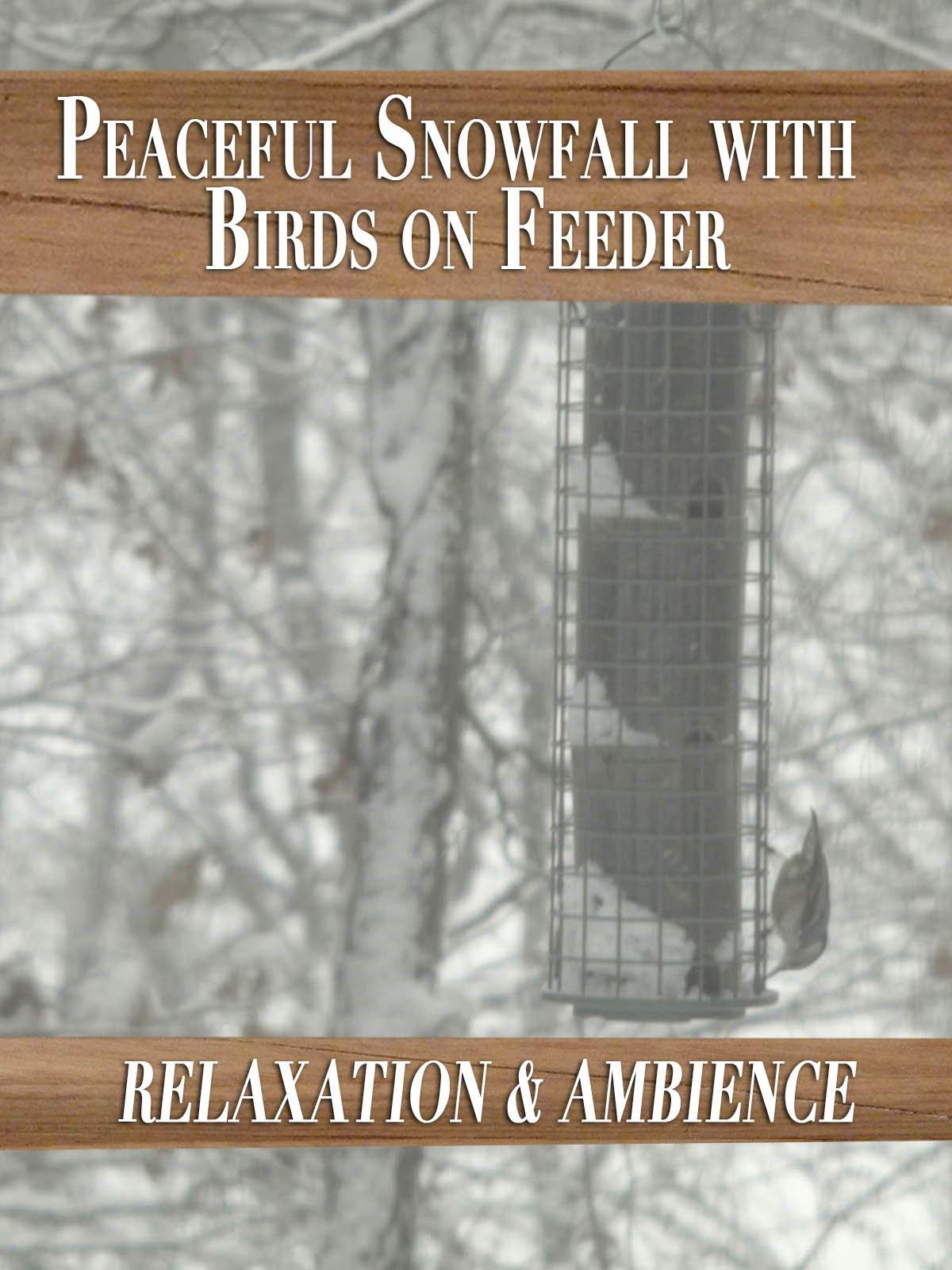 Peaceful Snowfall with Birds on Feeder
