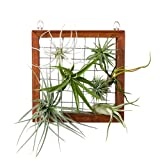Mkono Air Plant Frame Tillandsia Wall Display, 7 7/8 Inch