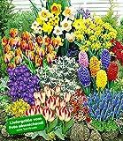 BALDUR-Garten 140 Blumenzwiebeln Spar-Paket