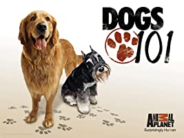 Dogs 101 Season 2