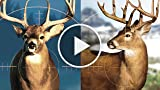 CGRundertow CABELA'S HUNTING EXPEDITIONS for PlayStation...