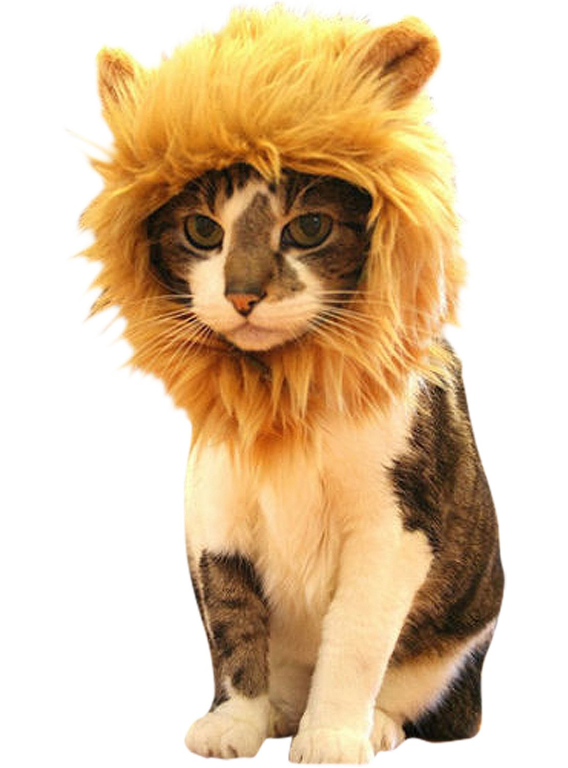 Prymal Lion Mane Cat Hat. Turn Your Cat Into A Ferocious Lion!