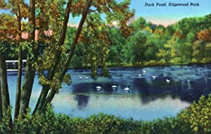Duck Pond at Edgewood Park