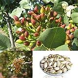 Yinpinxinmao 5pcs Rare Pistachio Vera Nut Tree Seed Bonsai Home Garden Outdoor Planting Decor