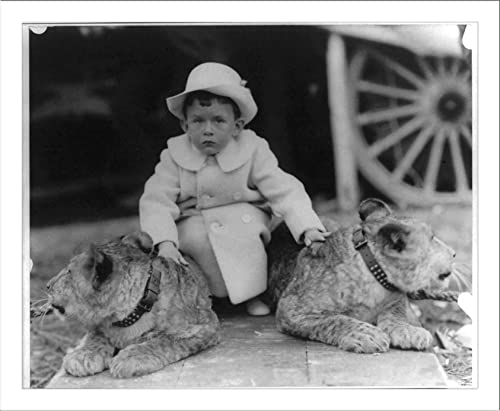Master Vinson Walsh McLean petting two tame lion cubs