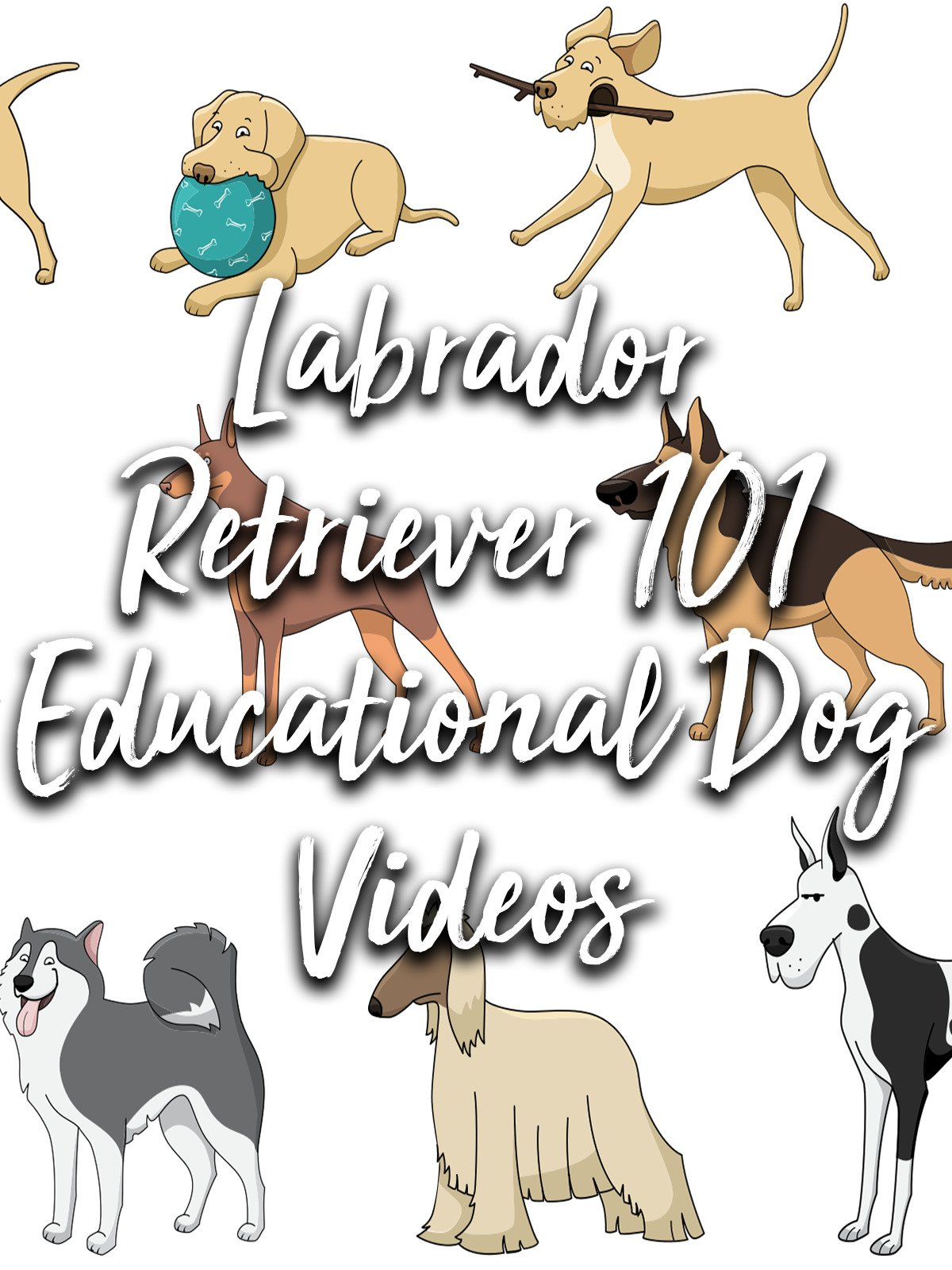 Labrador Retriever 101 Educational Dog Video